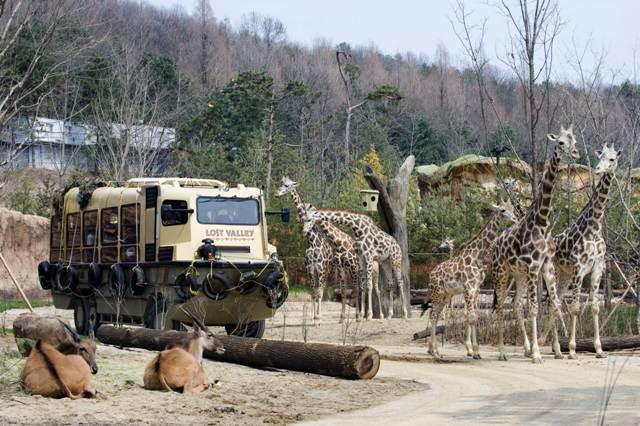 zoo everland