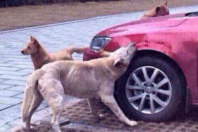 dog-revenge