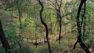 সিউলের মত ব্যস্ততম শহরে খুঁজে পাবেন উঁচু নিচু শত পথ