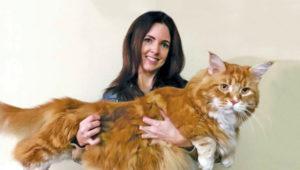 tallest-cat