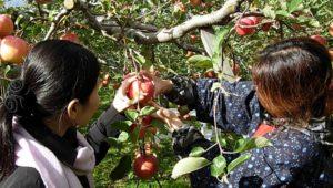 apple-in-japan